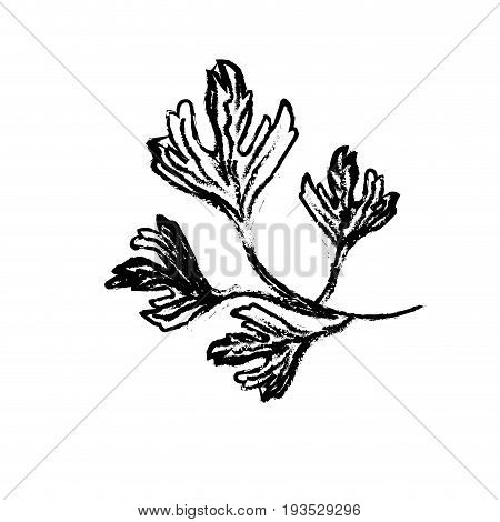 line coriander herb to natural condiment of food vector illustration