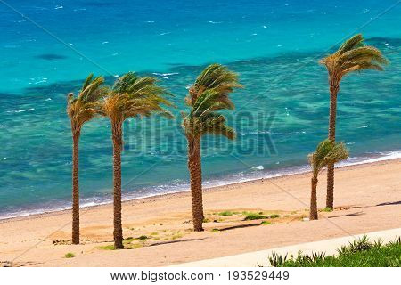 Egypt Dahab. Date palms on the background of the red sea and coral reef. Strong wind. Bright colors
