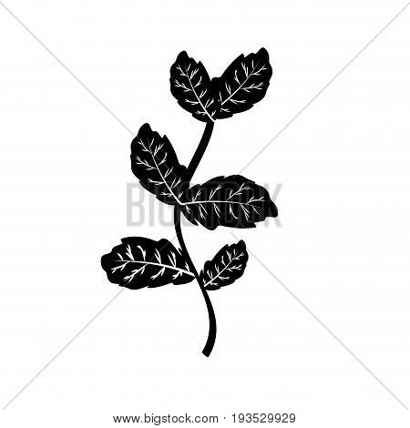 contour nice plant ingredient to condiment of food vector illustration