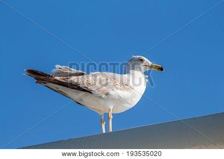 Seagull sitting on the ship sea portrait. Greece, Corfu. Clear sky background