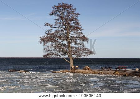 Lone tree on a small peninsula on a frozen lake.