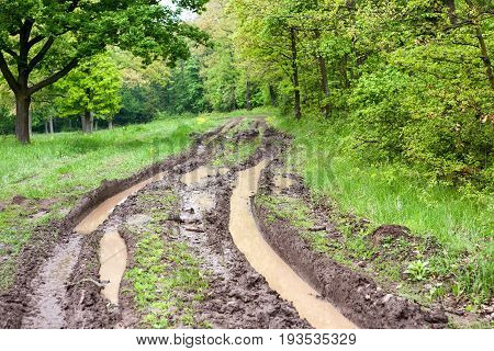 A nice Muddy forest road with green plants