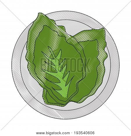 lettuce icon over white background colorful design vector illustration