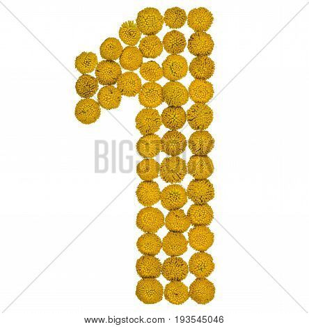 Arabic Numeral 1, One, From Yellow Flowers Of Tansy, Isolated On White Background