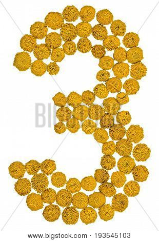 Arabic Numeral 3, Three, From Yellow Flowers Of Tansy, Isolated On White Background