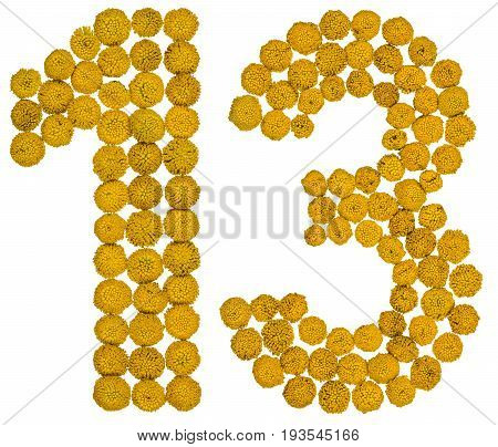 Arabic Numeral 13, Thirteen, From Yellow Flowers Of Tansy, Isolated On White Background