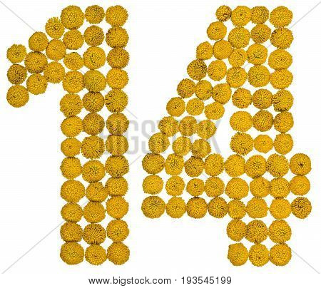 Arabic Numeral 14, Fourteen, From Yellow Flowers Of Tansy, Isolated On White Background