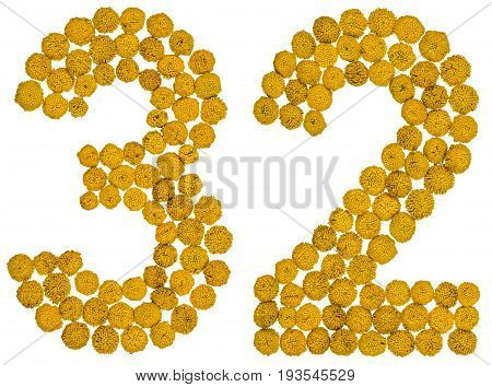 Arabic Numeral 32, Thirty Two, From Yellow Flowers Of Tansy, Isolated On White Background