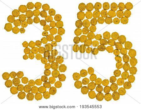 Arabic Numeral 35, Thirty Five, From Yellow Flowers Of Tansy, Isolated On White Background