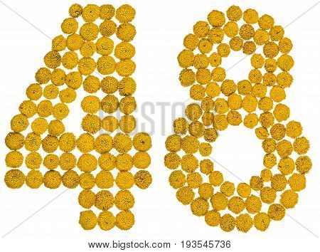 Arabic Numeral 48, Forty Eight, From Yellow Flowers Of Tansy, Isolated On White Background