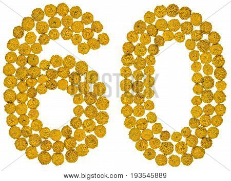 Arabic Numeral 60, Sixty, From Yellow Flowers Of Tansy, Isolated On White Background
