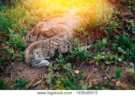 Family of rabbits little children live in a pet farm. Concept eco-meat breeding rabbits.