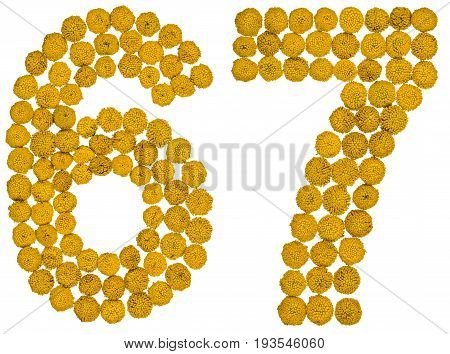 Arabic Numeral 67, Sixty Seven, From Yellow Flowers Of Tansy, Isolated On White Background