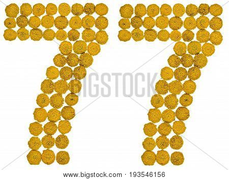 Arabic Numeral 77, Seventy Seven, From Yellow Flowers Of Tansy, Isolated On White Background
