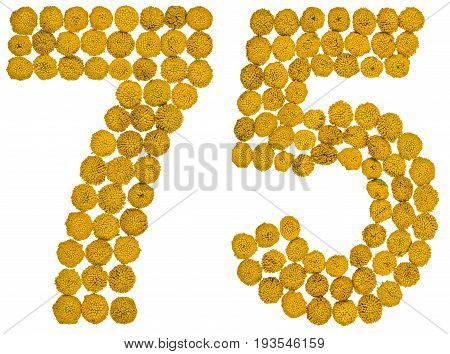 Arabic Numeral 75, Seventy Five, From Yellow Flowers Of Tansy, Isolated On White Background