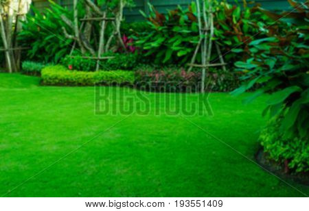 Blurring green lawn turf front for garden landscape design background.
