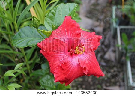 Flor roja fotografiada en jardín de Costa Rica