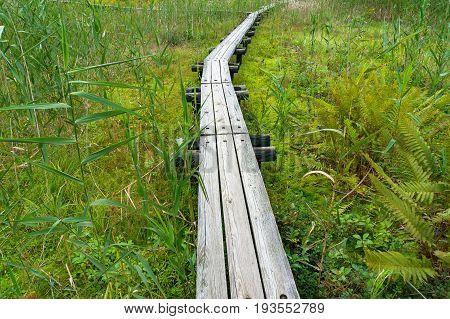 Wooden Hiking Path, Way Among Green Grass