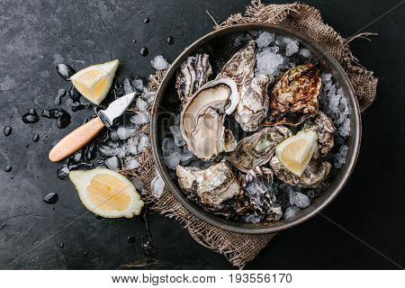 Raw oysters with ice and slices of lemon in a metal plate on a dark background. Top view