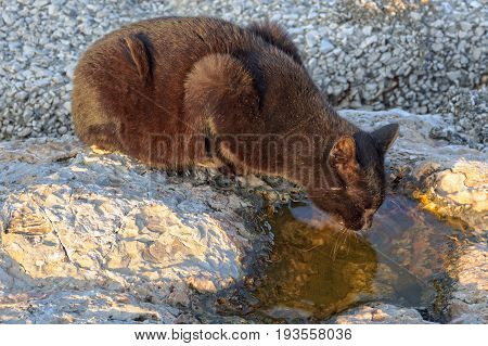 A thirsty stray cat is drinking from a puddle in the marina - Naples, Campania, Italy