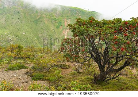 Mountain Landscape With Mountain Ash Tree With Bright Red Berries