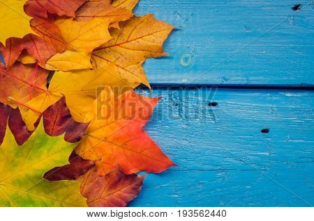 Autumn background with colorful fall maple leaves on blue rustic wooden table with place for text. Thanksgiving autumn holidays background concept. Frame with autumn leaves. Copy space. Top view.