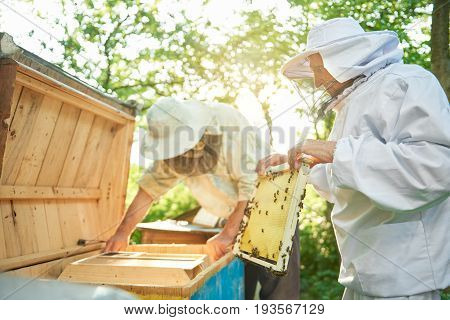 Senior male beekeeper wearing beekeeping suit holding honeycomb his colleague working with bees on the background.