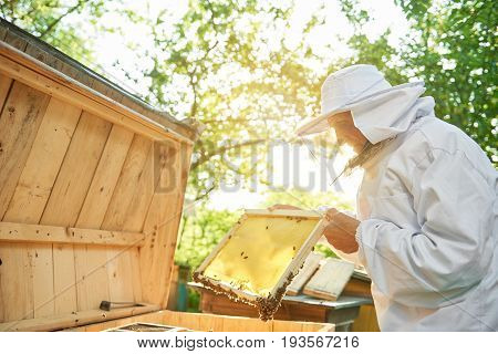 Elderly male beekeeper wearing beekeeping suit holding honeycomb with bees working at his apiary.