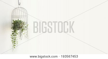 Green plant in birdcage on white background with blank space for text on right.