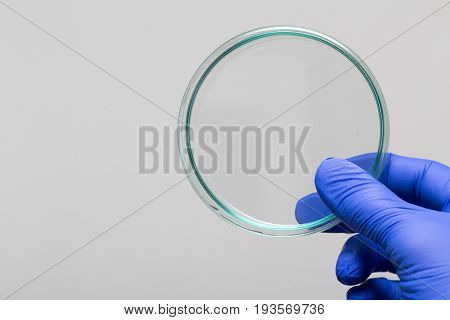 Empty petri dish for growing cultures of microorganisms in doctor hand , fungi and microbes. A Petri dish  ( Petrie dish. Petri plate or cell-culture dish)