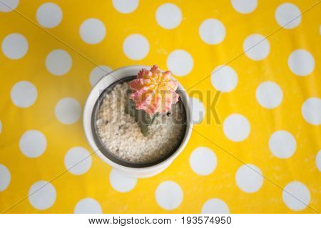 Cactus in pot on yellow dot table stock photo