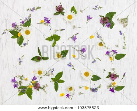 Top view on beautiful wild flowers on white wooden background. Summer flowers leaves and petals. Clover daisy bell-flowers forget-me-not