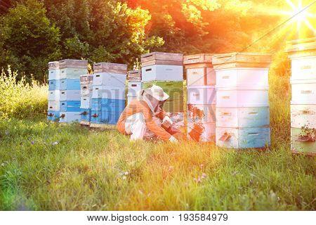 Full length of a male beekeeper tending beehives