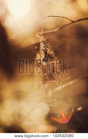 beautiful shallow focus picture od spider web in autumn forest