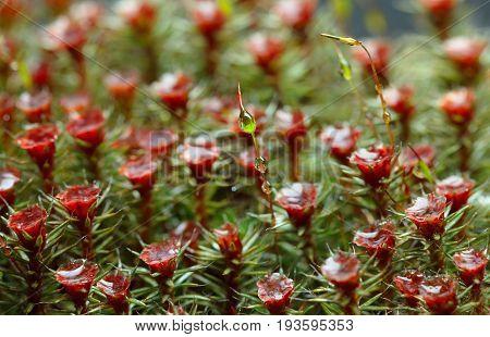 Moss Seta And Drops