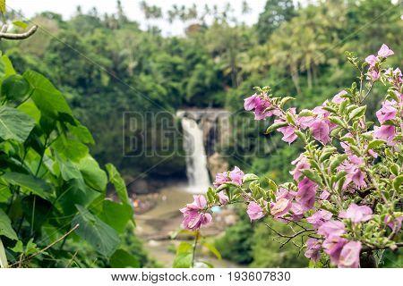Waterfall deep in the tropical rain forest of Ubud, trpical Bali island.