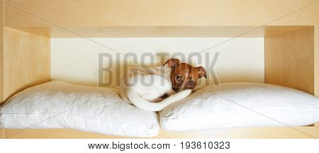 Sleepy Tried Dog In Bed