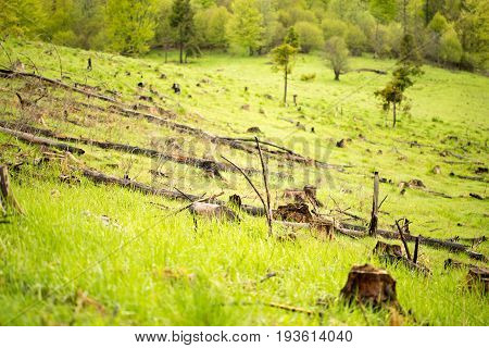 Deforestation in the mountains of the Carpathians. Stumps sticking out of tall grass.