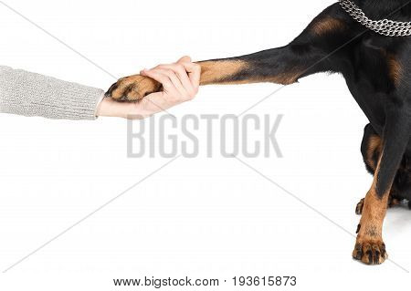 Beauceron Dog Paw In Human Hand Friendship Concept