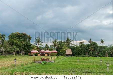 Restaurant facing the rice fields in Bali. Traditional Balinese restaurant facing the rice fields.