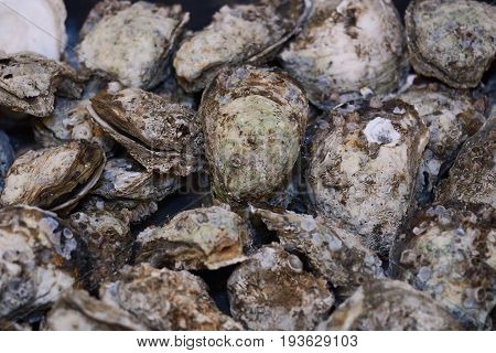 Fresh Opened Oysters In Market As Background