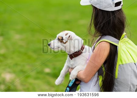 Little happy girl with doggy in the hands in park, summer, green grass, best friends. Breed Jack Russell Terrier is a positive, boundless joy and active pastime. Favorite and partner for games