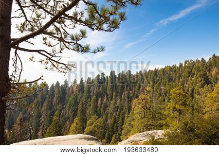 Viewing point from Generals Hwy thru Sequoia National Park in California, USA