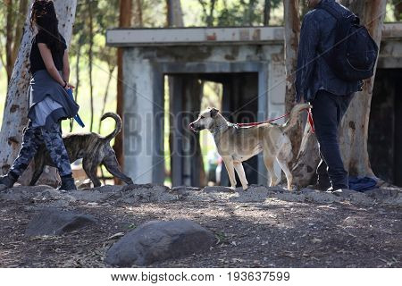 A man with a dog for a walk in the woods and in the city