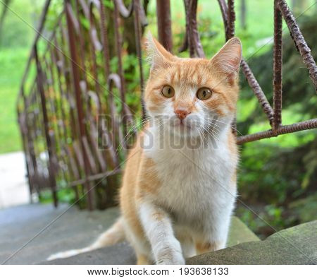 Curious ginger cat on outdoor stairs in garden