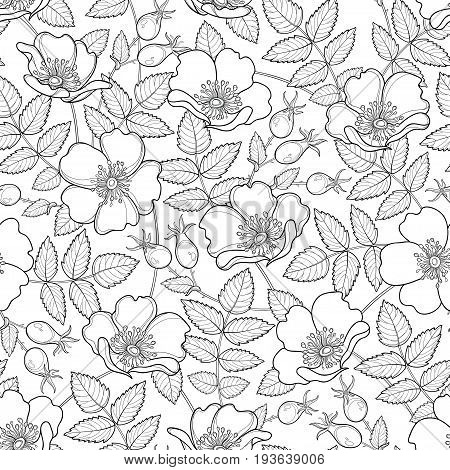 Vector seamless pattern with outline Dog rose or Rosa canina. Flower, hips and leaves on the white background. Rosehip pattern in contour style for summer design, medicine, homeopathy, coloring book.