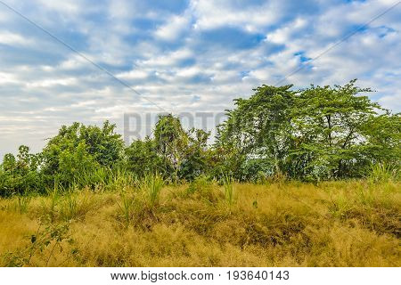 Meadow landscape scene at Guayaquil outskirts Ecuador