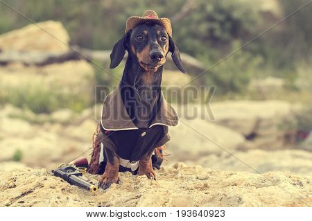 Horizontal portrait of a dog (puppy) breed dachshund black and tan in a cowboy costume sits on a stone against a background of green hills