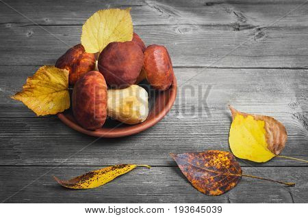 White porcini Mushrooms Cep Boletus over ceramic bowl Wooden gray Background. Autumn Cep white porcini mushrooms picking. Yellow autumn leaves.