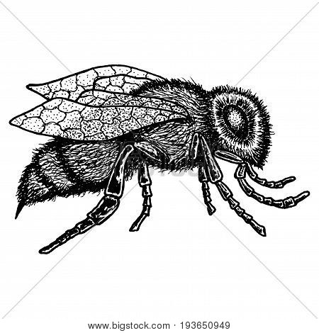 Monochrome Animal Icon with image of bee hand drawn on white background isolated vector illustration